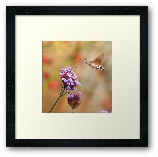 Hummingbird hawk-moth against a Flowery Background by Richard Heeks