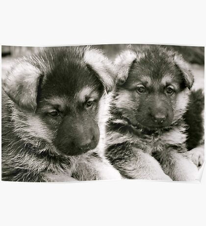You And I (German Shepherd Puppies) Poster