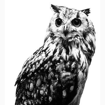 Owl by TommyGunGoblin