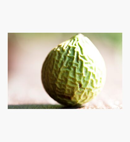 Wrinkly Green Beach Fruit Photographic Print