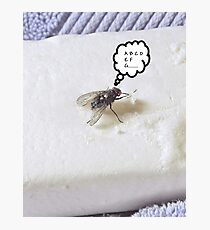 Prevent the Flu Fly Photographic Print