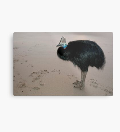 Ms Etty - cassowary on the beach Metal Print