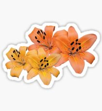 Gorgeous yellow and orange tiger lily flower photo art. Sticker