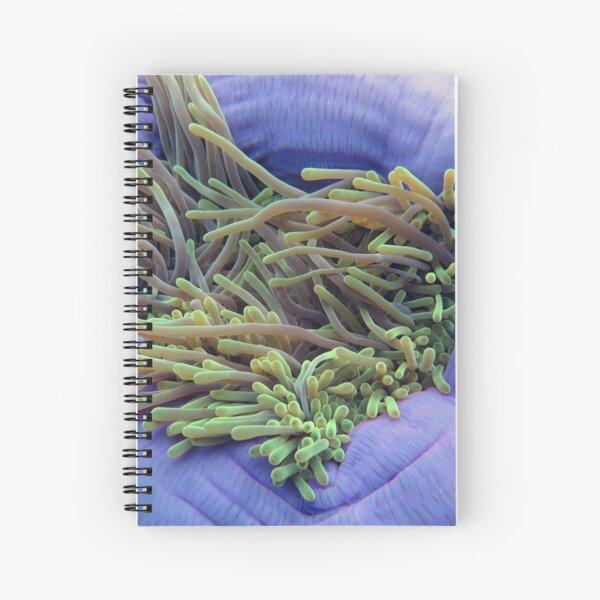 Sea Anemone Spiral Notebook