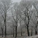 Winter on Darwen moor  by michaelwallwork