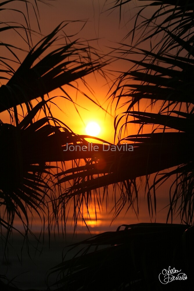 Palm Tree Sunset by Jonelle Davila