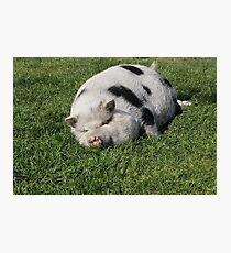 Phat Pig Fotodruck