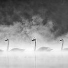 Swans In The Mist by Bill Maynard