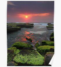 Weedy Sunrise Turimetta Poster