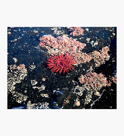 Little Red Sea Enemy Photographic Print