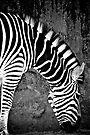 Stripes by Extraordinary Light