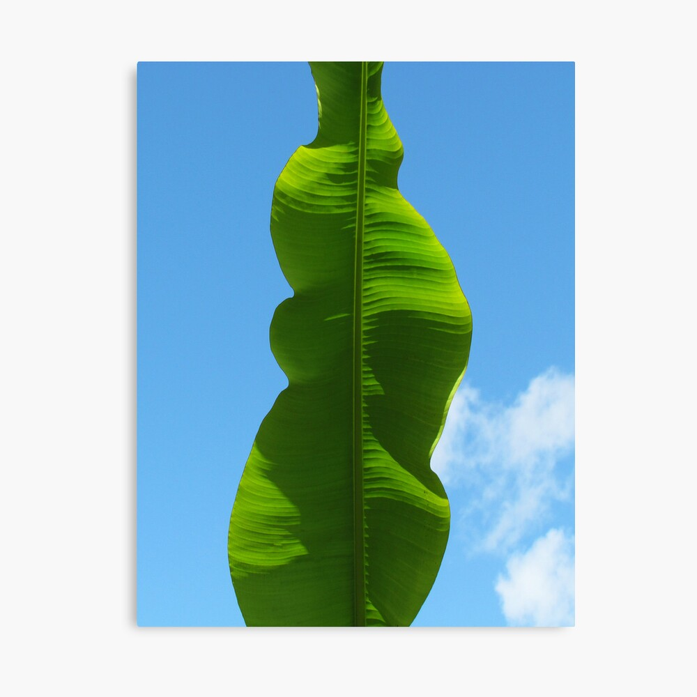 Banana Leaf Ripple Leinwanddruck