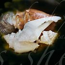 """""""See"""" shells.......... by Brenda Dow"""