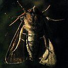 Moth says cheese by evon ski