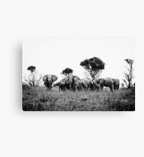 Elephant herd Leinwanddruck