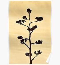 Century-Agave Americana Sepia Poster