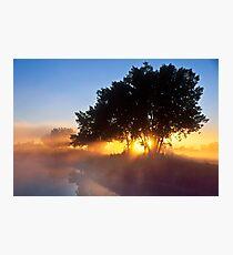 Buttercup Sunrise Photographic Print