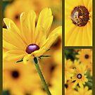 So Yellow! by Shubd