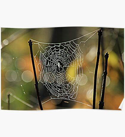 Spider's Creation Poster