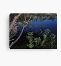 Ecological Wonder Canvas Print