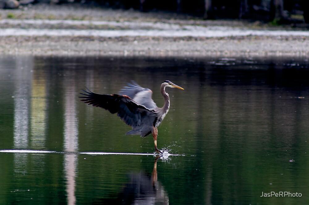 Landing Great Blue Heron by JasPeRPhoto