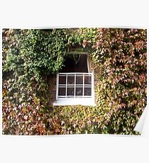 Window Masked with Ivy Poster