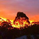 Sunset Chez Moi - Sunshine Coast, Australia by Angela Gannicott