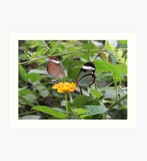 Two By Two Flutterby Art Print