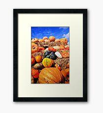 Colorful pumpkins  Framed Print