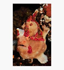 Warty  Photographic Print