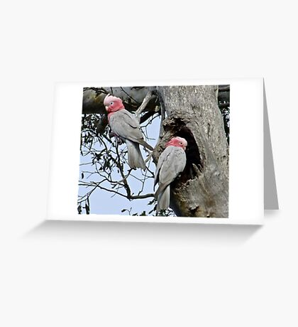 The Nesting Greeting Card
