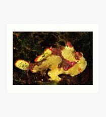 Clown Frogfish Art Print