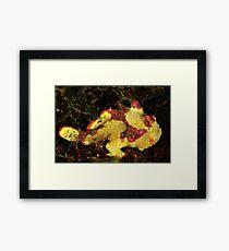 Clown Frogfish Framed Print