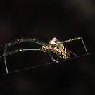 Spindly Spider by Paul  Donaldson
