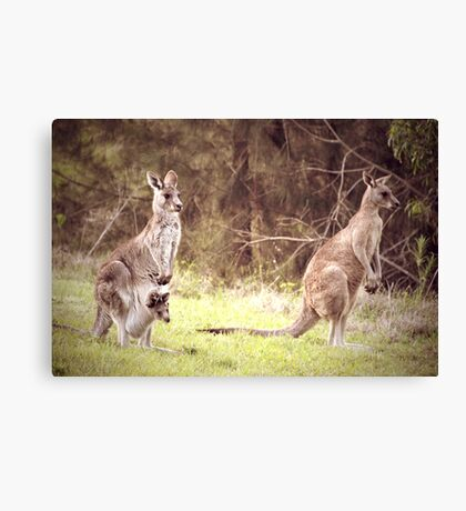 The Kangaroo Family Canvas Print
