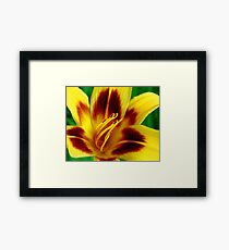 Yellow and Red Daylily Framed Print