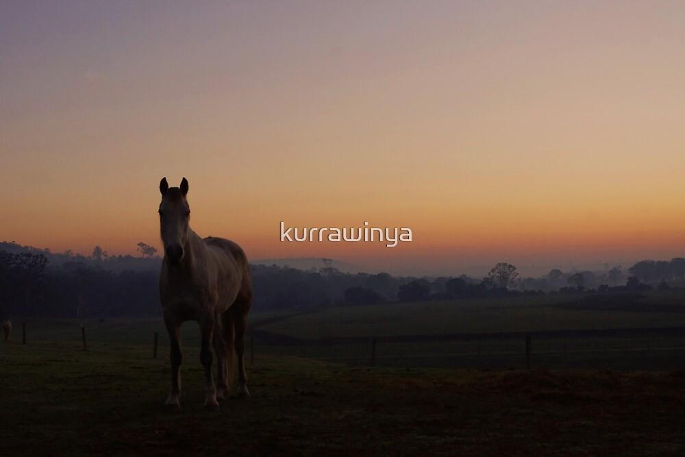 Cooyar Dawn by Penny Kittel