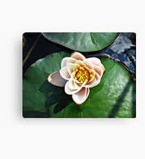 Schliersee Lily Pad. Canvas Print