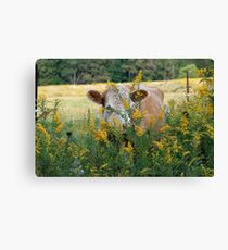 The Golden Cow In The Golden Pasture Canvas Print