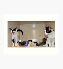 Meet The Kittens Art Print