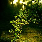 light of green by Malin Nordlund