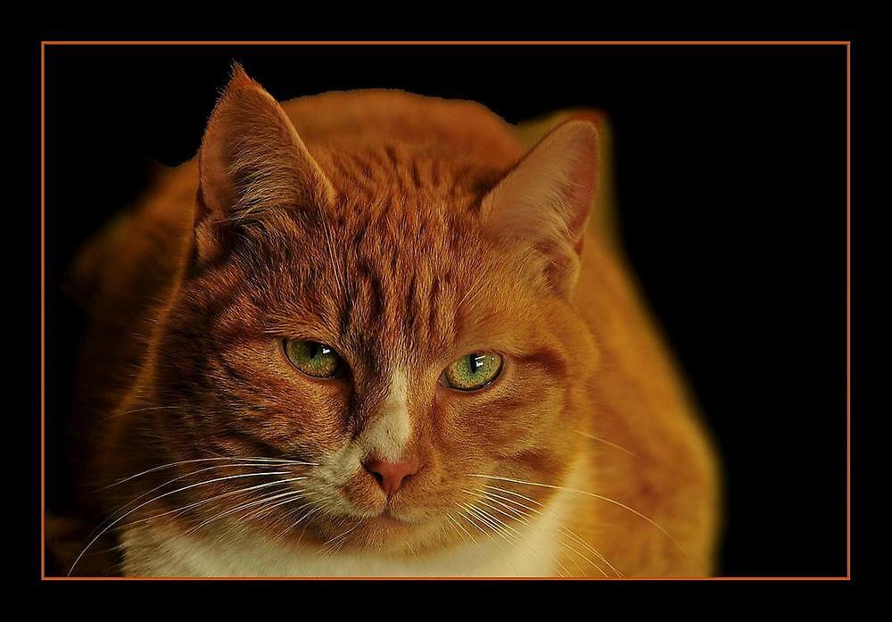 LOVE MY CAT by RoseMarie747