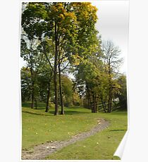 Footpath in wood Poster