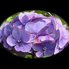 Blue Hydrangea by Lynn Bolt