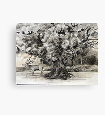 The broad oak Sherwood forest. Canvas Print