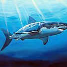 A great white Shark. by Robert David Gellion