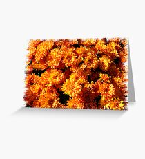Fall Autumn Colors - Orange Chrysanthemums - Flowers in Sunlight Greeting Card