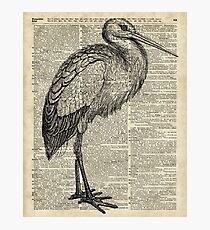 Stork Wild Bird Vintage Ink Illustration Encyclopedia Collage Photographic Print