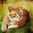 Clyde ~ Guardian of the Yard by Rhonda Strickland