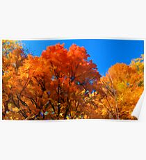 Red, Orange & Yellow Leaves on Fall Autumn Trees against a Blue Sky Poster